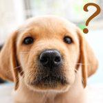 動物は何故歯を磨かなくても虫歯にならないのか